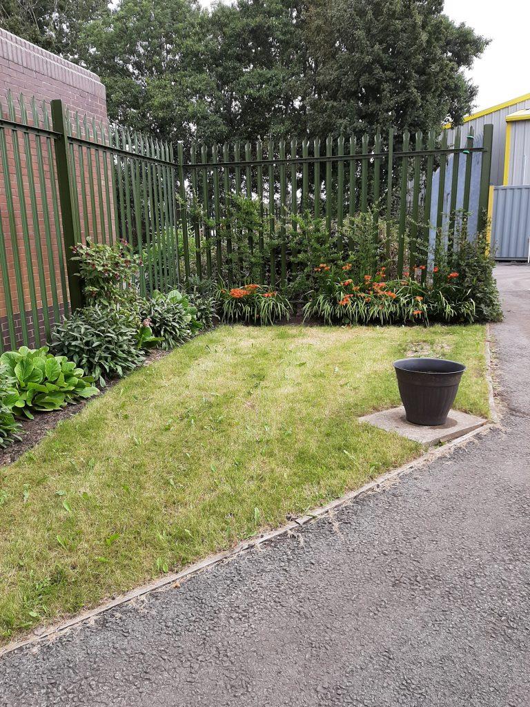 A rejuvenated garden